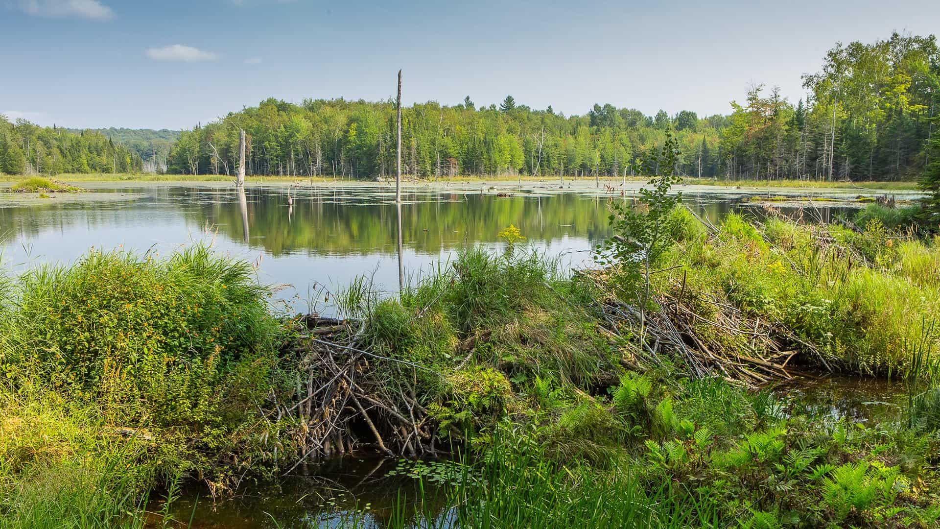 Parc National du Mont-Orford - Orford