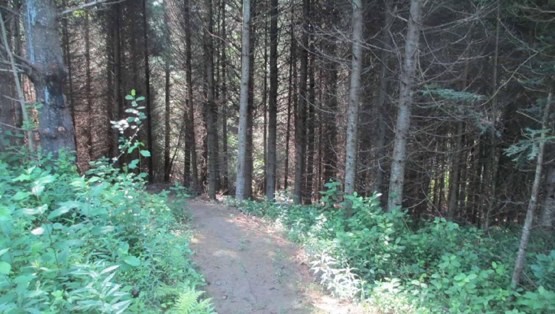 Massawippi Trail