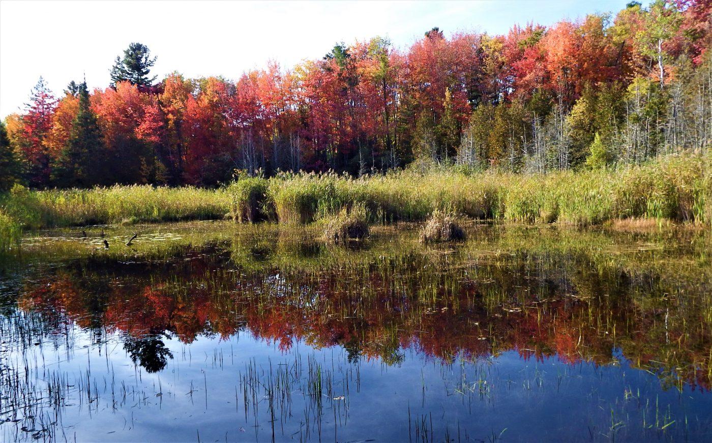 Le Marais de la Rivière aux Cerises avec les arbres aux couleurs d'automne